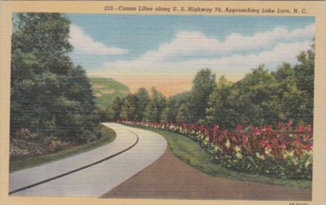 North Carolina Lake Lure Canna Lilies Along U S Highway 74