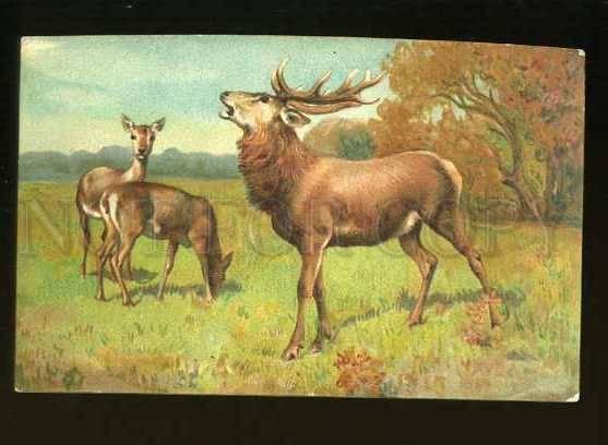 127750 Family DEER on Field HUNT Vintage colorful PC