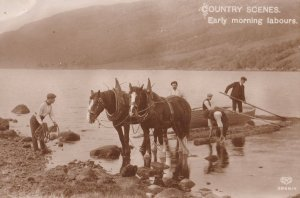 Early Morning Labours Horse Helping Launch Boat Real Photo Postcard