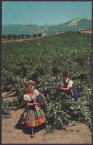 Vineyard,Italian Swiss Colony,Asti,CA Postcard BIN