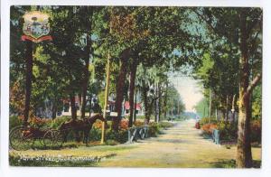Jacksonville FL Postcard Park Street 1910