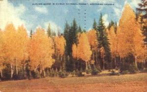 Autum Scene in Kaibab National Forest