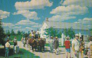 Team Of Oxen Upper Canada Village Ontario
