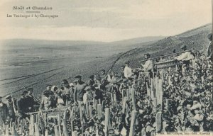 MOET & CHANDON , France, 1900-10s ; Champagne Production #4