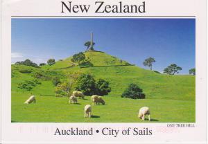 NEW ZEALAND SHEEP, AUCKLAND