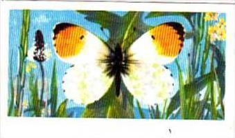 Brooke Bond Tea British Butterflies No 43 Orange Tip