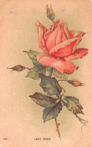 Post Card Old Vintage Antique Jack Rose Unused