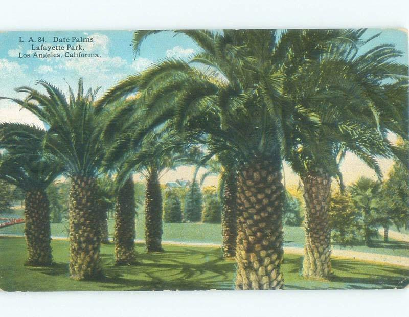 Divided-Back DATE PALM TREES AT LAFAYETTE PARK Los Angeles California CA c9372