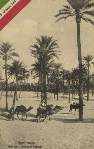 PC CPA LIBIA, NELL' OASI, BOSCO DI PALMIZI, Vintage Postcard (b16638)