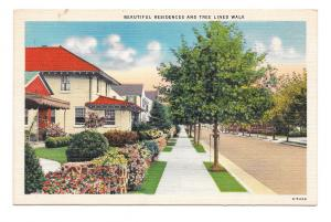 Beautiful Residences Tree Lined Walk Small Town View Vintage Linen Postcard