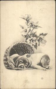 Cute Sleepy Puppy Dogs in Basket c1910 Postcard