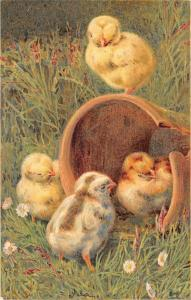 Easter Chicks in garden Antique Postcard L3224