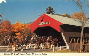 White Mountains-Jackson NH~Clydesdale Horses on Jackson Covered Bridge~1960-70s