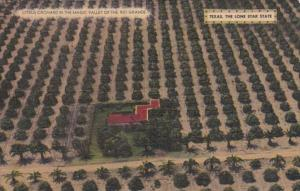 Texas Citrus Orchard In The Magic Valley Of The Rio GRande
