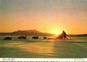 Alaska Dog Sled Team