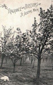St. Joseph, Michigan, MI, Fragrance & Blossoms, Dog, 1915 Vintage Postcard g7531