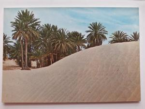 Tunisia, Africa, 1615, Douz, Sahara, Vintage Postcard