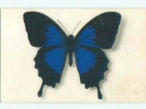 foreign 1950's Postcard BUTTERFLY AT MUSEUM IN PARIS FRANCE AC3779-12