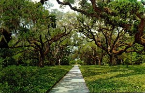 South Carolina Murrels Inlet Brookgreen Gardens Live Oak Walk
