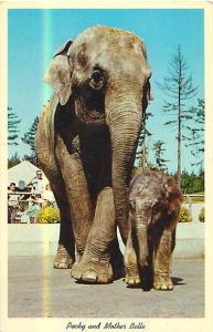 Baby Packy & Mother Belle Elephants Portland Oregon Zoo