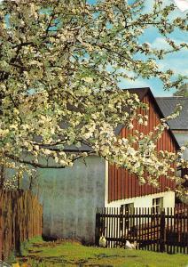 Ein Frohes Pfingstfest Tree Flowers House Haus