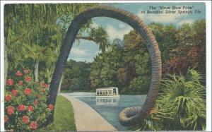 Horse Shoe Palm, Silver Springs FL