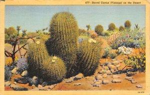 Cactus Post Card Barrel Cactus Visnaga on the Desert 1944
