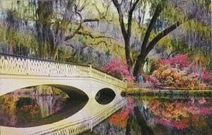 South Carolina Charleston Magnolia Gardens Rustic Bridge