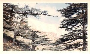 Cedars, Lebanon Postcard, Carte Postale Only 40 trees exist, potected as Nati...