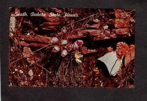 SD South Dakota State Flower J L Close White Lake Proposed Flowers Postcard
