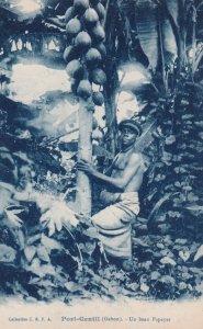 GABON ; Africa, 00-10s; Port-Gentil , Un beau papayer