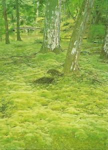 Postal 51959: KYOTO -Jardin del Templo Moss