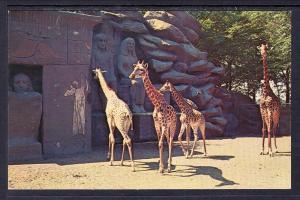 Giraffes,Zoo,Detroit,MI