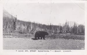 RP: Black Bear , Banff , Alberta , Canada , PU-1951