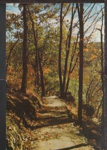 Wooded Path Bluff Mississippi River Postcard BIN