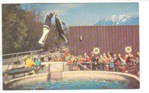 Splasher, a Pacific white-sided dolphin, Vancouver Public Aquarium, Stanley P...