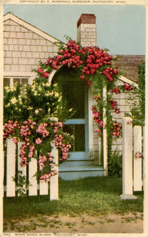 MA - Nantucket. When Roses Bloom