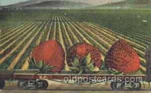 Giant Strawberry Exaggeration Postcard Post Card  Giant Strawberry