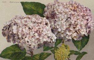Hydrangea Flowers , 00-10s
