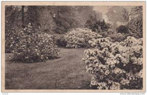Azalea Garden, Royal Botanic Gardens, London, England, UK, 1900-1910s