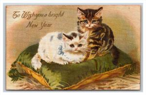 20611  CATS   New year,  cats on a pillow