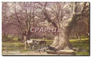 Postcard The Old Fancy donkeys