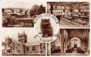 Wimborne Canford Bridge Minster Black Small Cute Cat Kitten Good Luck 1939