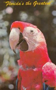 Florida Parrot , 1950-60s #1 (Miami)