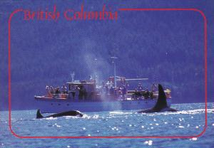 Canada Killer Whale Watching British Columbia