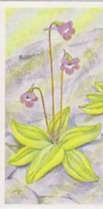 Brooke Bond Tea Vintage Trade Card Journey Downstream No 5 Common Butterworth