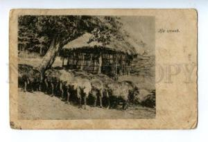 146353 BESSARABIA Sheeps Vintage postcard