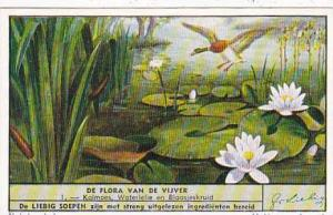 Liebig Trade Card S1516 Marsh Flowers No 1 Kalmoes Waterlelie en Blaasjeskruid