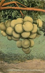 Agriculture Farming C-1910 Citrus Drew postcard 1760 Grape postcard 1760