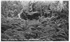 Prince of Wales Fern Grove Franz Josef Westland New Zealand RPPC postcard